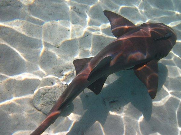 5105967-Friendly_Shark-0